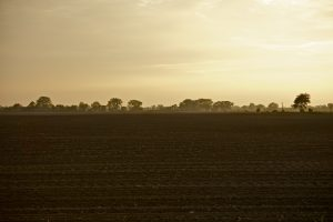 Illinois Crop Growing Land