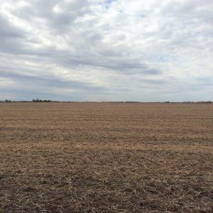 Crop Growing Land Illinois
