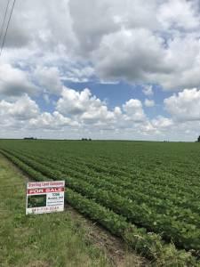 Farmland Real Estate Illinois