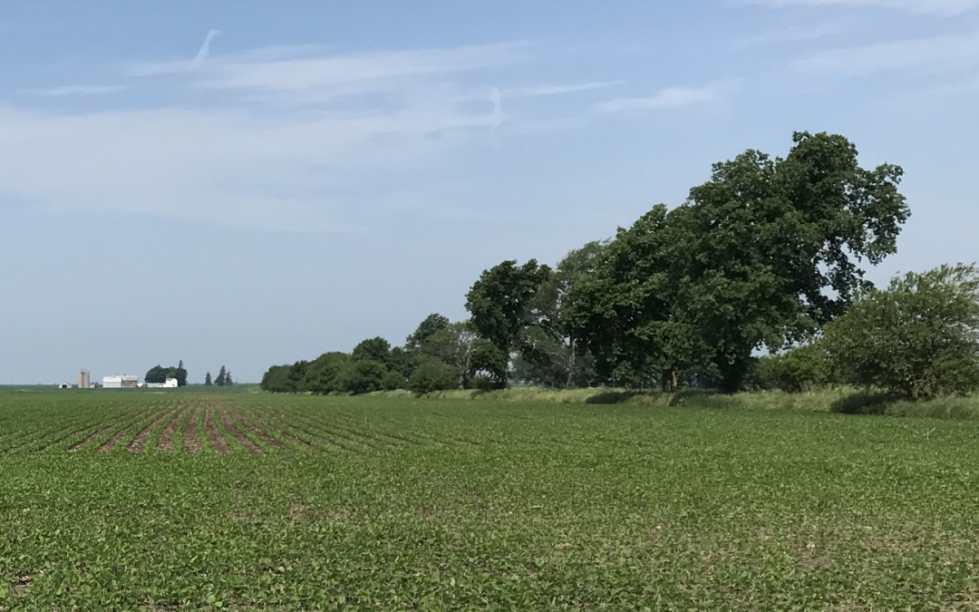 150 Acres in Lee County